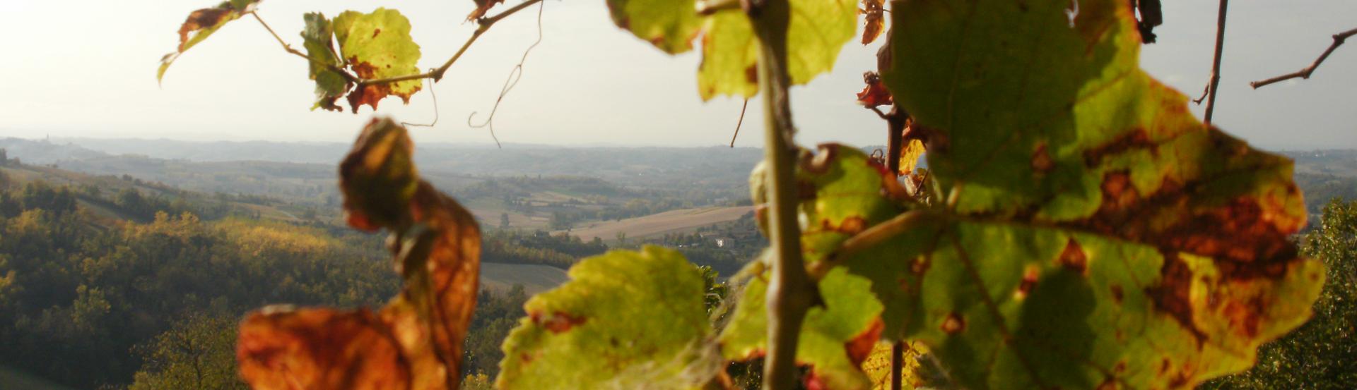 monferrato-bb-la-casa-sui-tetti